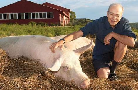 Peter-Singer-a-pig-in-Bucharest